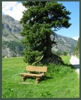 Sils-Svizzera-panchina-photo-by-Tiziana-Bergantin-B501